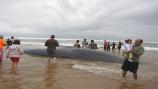 Balea agertu da Zarauzko hondartzan
