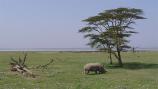 Kenya eta Tanzania