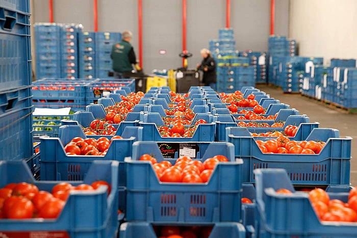 Tomate kutxak Herbehereetako Zaltbommelgo merkatuan salgai. ©Bas Czerwinski / EFE