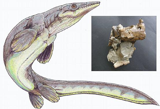 Mosasaurio baten irudia eta aurkitutako hezurrak.