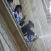 realaren_igoera_ospakizuna_donostian_diputazioan_2010_06_14