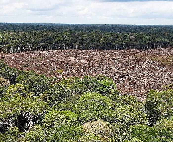Moztutako baso bat Amazonasen. ©MARCELO SAYAO / Efe