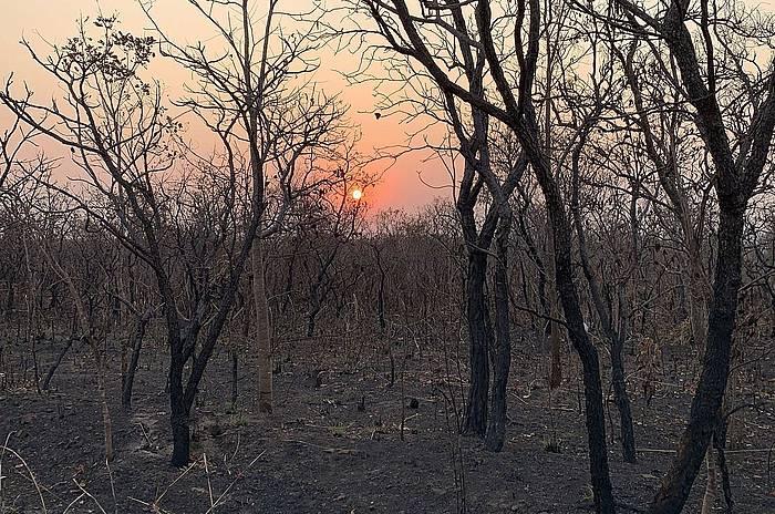 Mato Grosso Amazoniako estatuko zati bat, kiskalita. /
