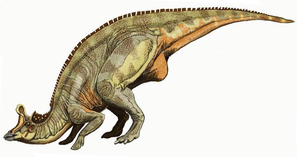 Lambeosaurus lambei bat