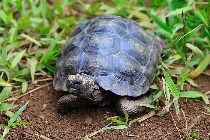 Galapago uharteak Ekuadorko kosta kontinentaletik mila kilometrora daude, eta horregatik sortu dira bertan espezie bereziak.