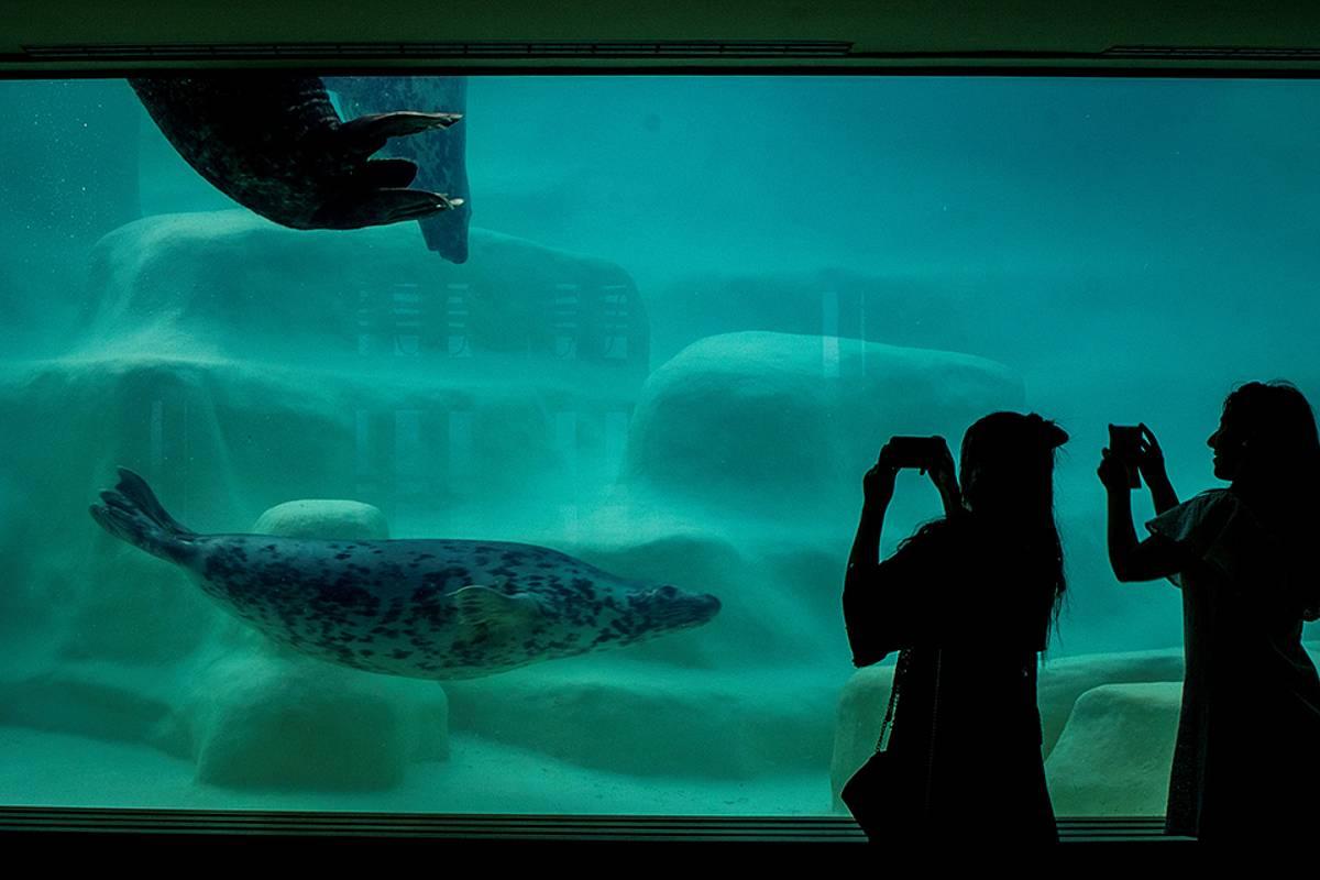 Zoologikoak eta akuarioak animaliak erraz ikusteko eta argazkia egiteko diseinaturik daude. NOR