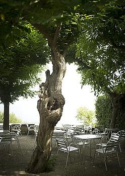 Igeldoko Buenavista jatetxearen terrazako akazia. / GARI GARAIALDE / ARGAZKI PRESS
