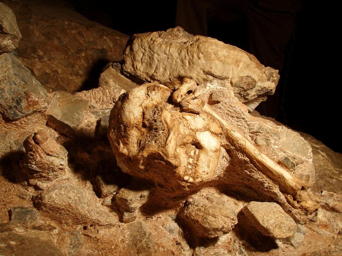 <em>Little Foot</em> izenarekin ezagun den eskeletoaren aztarnak. ©PURDUE UNIVERSITY