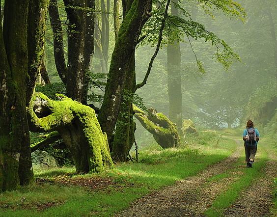 Bertizko natur parkeak 2.000 hektarea inguru ditu. / JOXEAN GIL-GARCIA