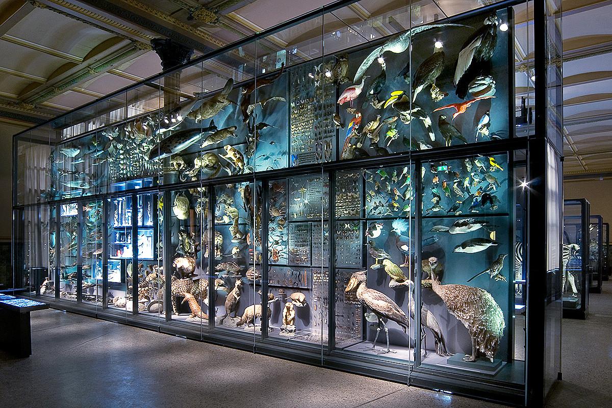 Biodibertsitatearen horma, Berlingo Historia Naturalaren Museoan.