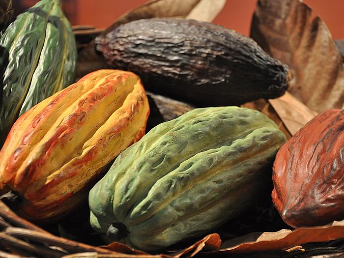 Kakao babak kolore ugari ageri dituzten fruituen barruan gordeta daude. ©JOSEAN GIL-GARCIA