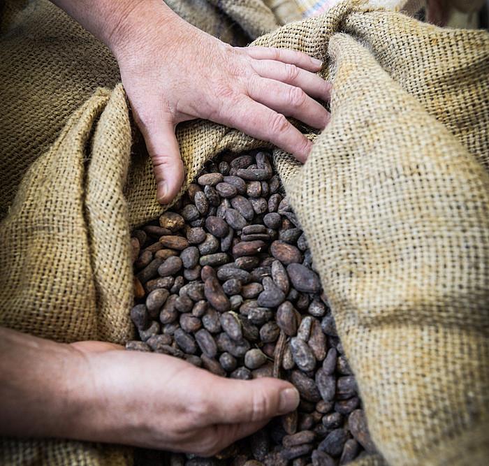 Kakao aleak Amsterdamgo portu batetik ekartzen dituzte. ©ISABELLE MIQUELESTORENA
