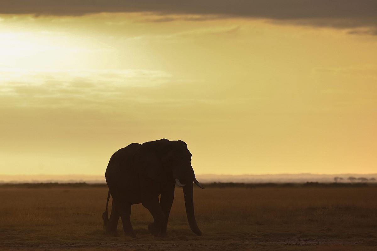 Elefante bat Kenyako eremu babestu batean, artxiboko irudi batean. ©DAI KUROKAWA / EFE