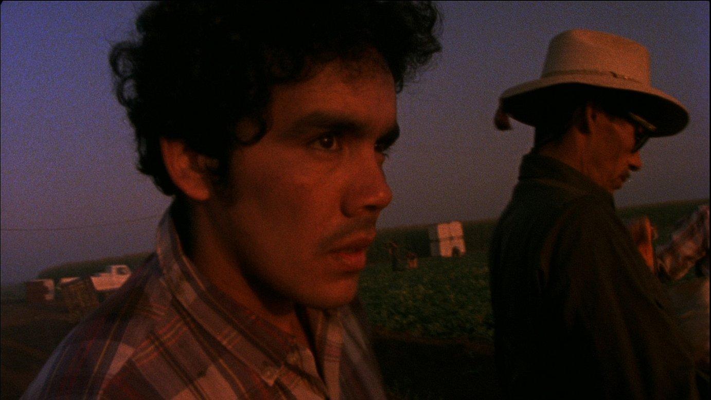 <em>Alambrista</em> filmak irabazi zuen sari nagusia 1978an. &copy;BERRIA