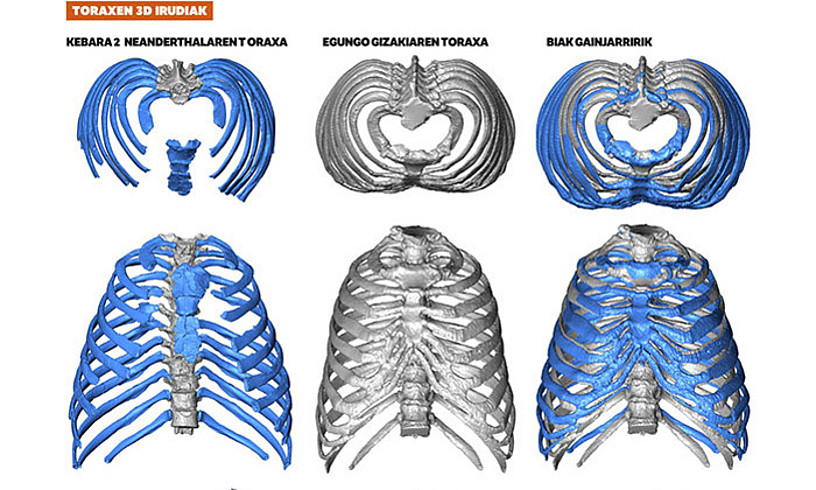 Neanderthalen toraxaren 3Dko irudia