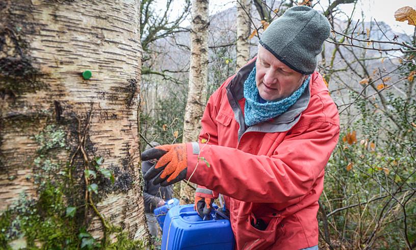 Dhulstek material guztia prest du, bizpahiru asteren buruan igaten hasiko den urki izerdia biltzeko. ©ISABELLE MIQUELESTORENA