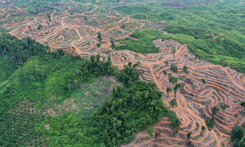 Indonesiako oihan eremu suntsitu bat, palma oliorako plantazio bat landatzeko moztua. ©HOTLI SIMANJUNTAK / EFE