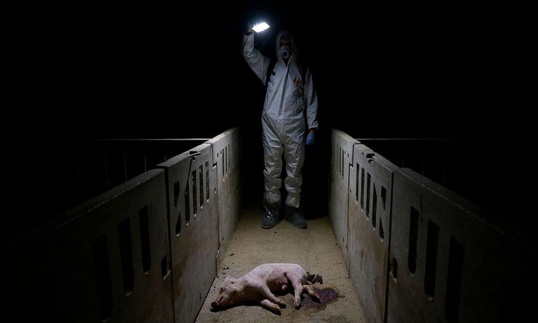 Aitor Garmendiak aurkeztutako <em>Inside the Spanish Pork Industry: The Pig Factory of Europe</em> argazki sortako argazki bat. ©AITOR GARMENDIA