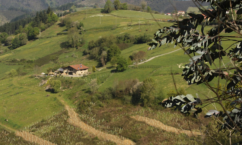 Muxikan (Bizkaia), Undabaso eremuanlandatzen ari diren sailetako batzuk. ©OSKAR MATXIN / FOKU