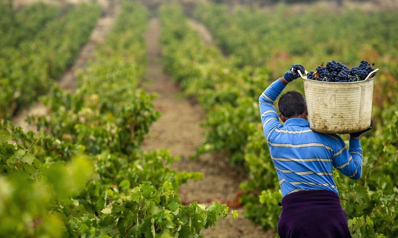 Mahats bilketa Bastidako Tierra upeltegian. Sor-marka berriaren bultzatzaileetako bat da. ©JAIZKI FONTANEDA / FOKU