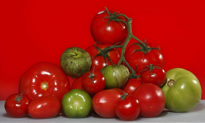 Mota ezberdinak. Tomate mota ezberdin asko daude. Euskal ikerlariak tokiko tomatearen inguruan ari dira lanean, batik bat. ©JOHN WATSON-RILEY / EFE
