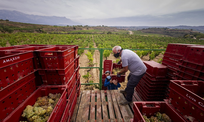 Mahats bilketa Villabuenako lurretan, artxiboko irudi batean. ©JAIZKI FONTANEDA / FOKU
