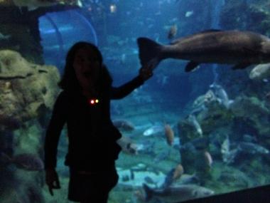 Gozada izan da hautzarora itzultzera seme-alabekin bayeta. Aquariuma asko gustatu zaigu eta museoan gure gustukoenak baleontziko eta fosiletako atalak izan dira.