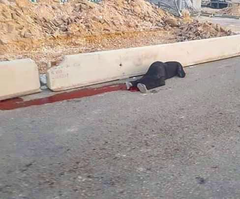 Israelgo soldaduek emakume palestinar bat hil dute Zisjordanian