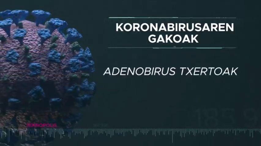 Koronabirusaren gakoak. Adenobirus txertoak